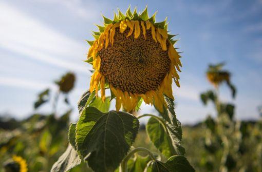 Grüne: Beim Klimaschutz muss mehr passieren