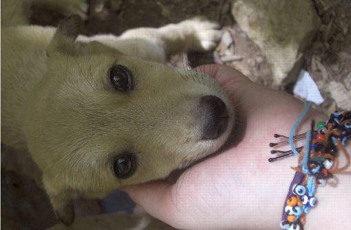 Hundewelpe nach zehn Tagen aus Schacht gerettet