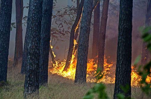 Die Waldbrandgefahr steigt jeden Tag