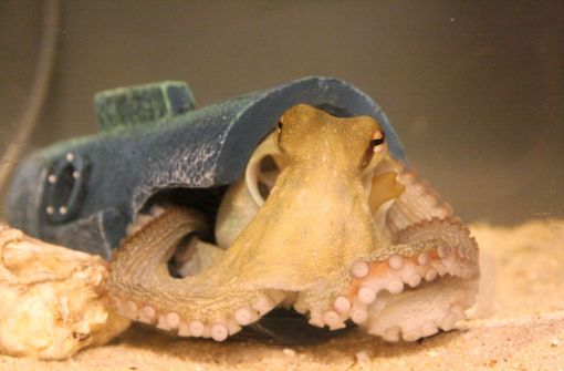 Ecstasy macht Kraken zu Kuscheltigern