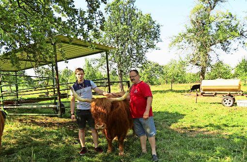 Rindviecher sollen ihre Hütte verlieren