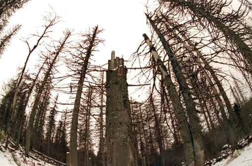 Das Archivbild vom November 1997 zeigt abgestorbene Bäume auf dem 1370 Meter hohen Lusen im Nationalpark Bayerischer Wald. Foto: dpa