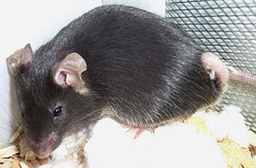 Die Tiere stammen wahrscheinlich aus einem Labor. Foto: Tierheim Botnang