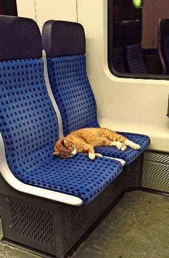 Ausreißer-Katze wartet auf ihre Besitzer