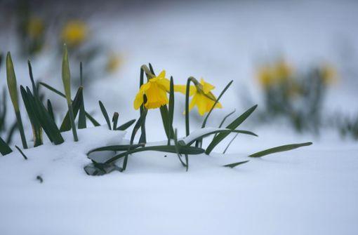 Der Frühlingsbeginn wird winterlich