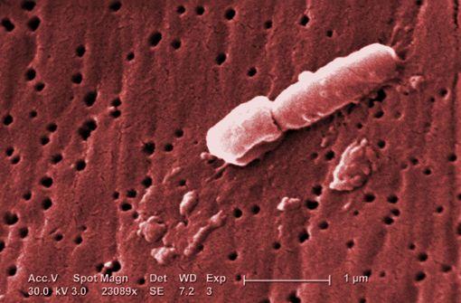 Gefährliche Darmbakterien breiten sich aus
