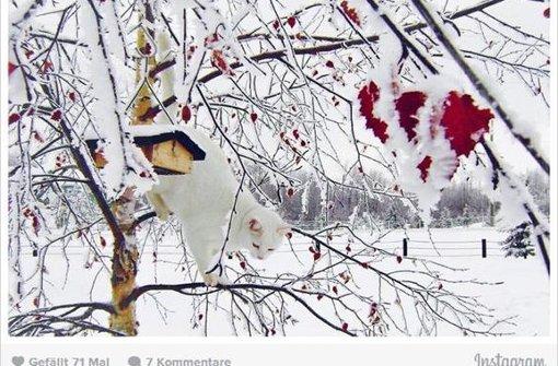 Die zehn schönsten Schnee-Katzen bei Instagram