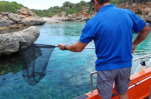 Diese Kuriositäten schwimmen an Mallorcas Küsten