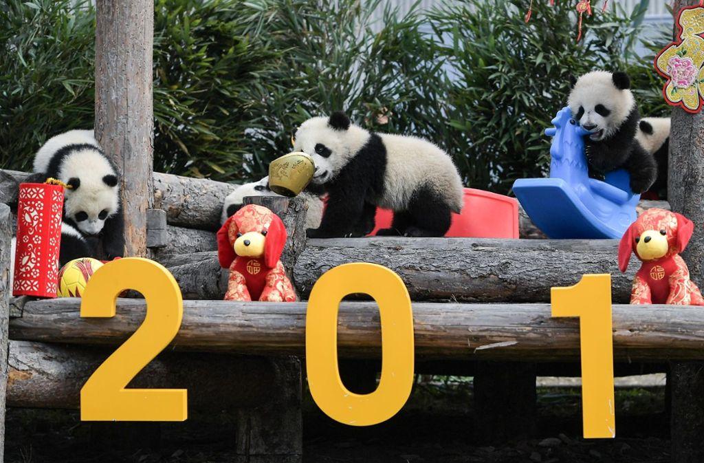 In China hat das Jahr des Hundes begonnen. - Stuttgarter Nachrichten