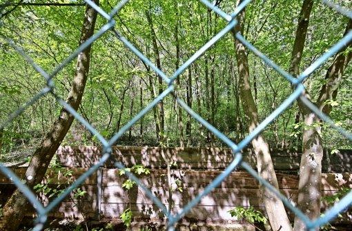 Das Gelände rund um die alte Deponie am Lemberg ist  ein beliebtes Naherholungsgebiet. Aber für die Sanierung müssen  Bäume gefällt werden. Foto: factum/Archiv