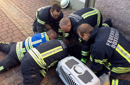 Feuerwehr rettet Kater aus Gully