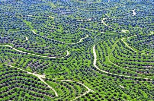 Das umstrittene Öl aus dem Regenwald