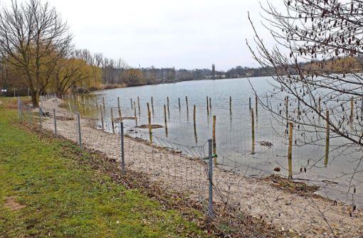Am  Max-Eyth-See wird derzeit eine naturnahe Uferzone geschaffen. Der Schutzzaun soll später entfernt werden. Foto: Iris Frey