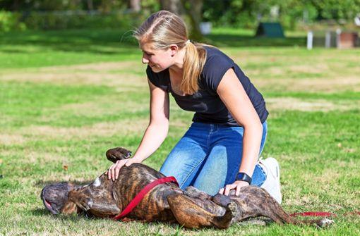 Die häufigsten Notfälle bei Hunden sind Vergiftungen