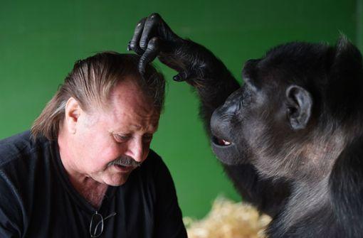 Robby wurde in einem deutschen Zoo geboren, früh von seinen Artgenossen getrennt und lebt seit seinem fünften Lebensjahr im Circus Belly von Klaus Köhler. Heute ist der Schimpanse 47 Jahre alt. Foto: dpa