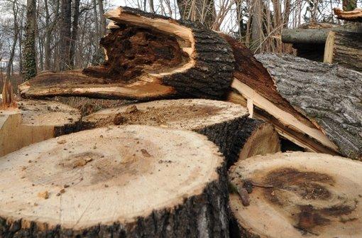 Die Stadt fällt Bäume