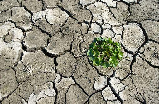 Die verletzliche Haut der Erde