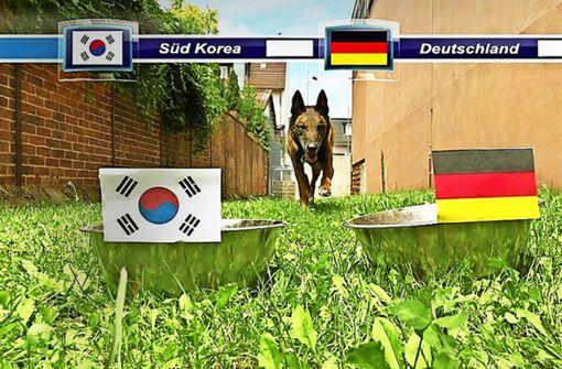 Polizeihund Ace als WM-Orakel