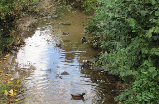 Wasserqualität der Aich hat sich verschlechtert