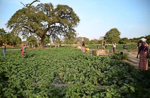 Arbeiten in Afrika statt Armutsflucht