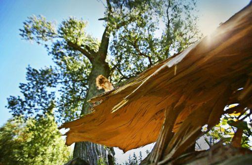 Gerade im  Sommer verlieren Bäume unvorhersehbar einzelne Äste, die in vollem Laub stehen. Foto: dpa