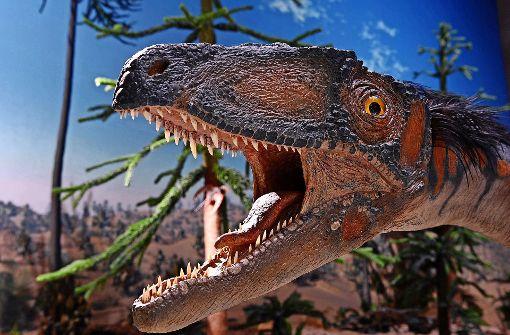 Was vor Millionen Jahren am Standort der Uni Hohenheim war