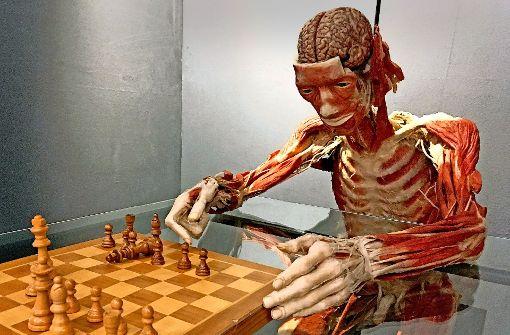 Ein Plastinat am Schachbrett ist nun dauerhaft in  Heidelberg ausgestellt. Foto: dpa