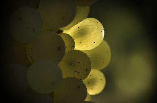Wein-Schelte stößt Fellbacher Wengertern sauer auf