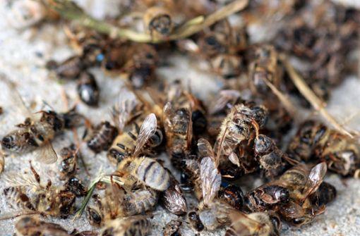Ein guter Tag für Bienen