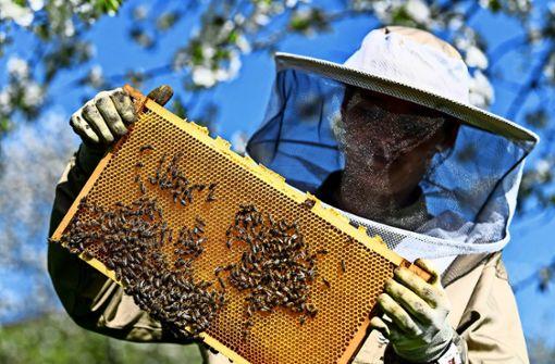 Rauswurf der Bienen schlägt hohe Wellen