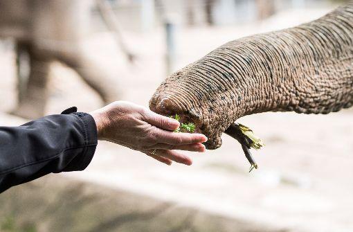 Abgemagerte Elefantenkuh aus Osteuropa gerettet