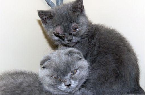 Weitere Katzen sterben im Stuttgarter Tierheim