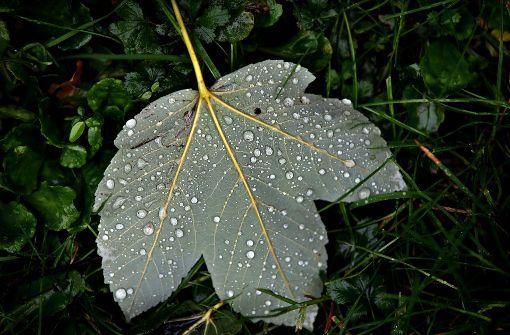 Ungemütlicher Herbst in den kommenden Tagen