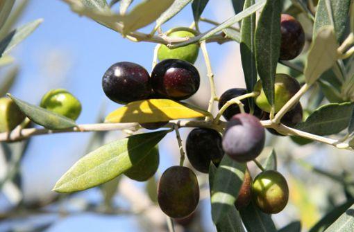 Exzellentes Olivenöl hat seinen Preis