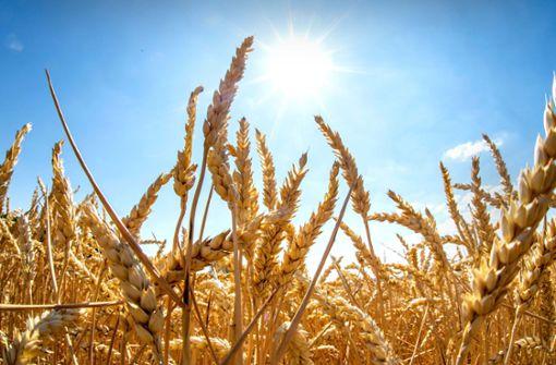 Göppinger Landwirte trotzen der Hitze