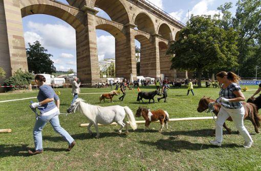 Ein Pferdemusical zum Markt