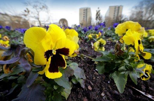 Der Stadtgarten soll verschönert werden