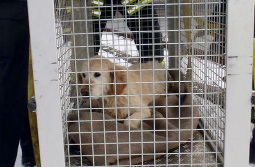 Hund bei Minusgraden festgefroren