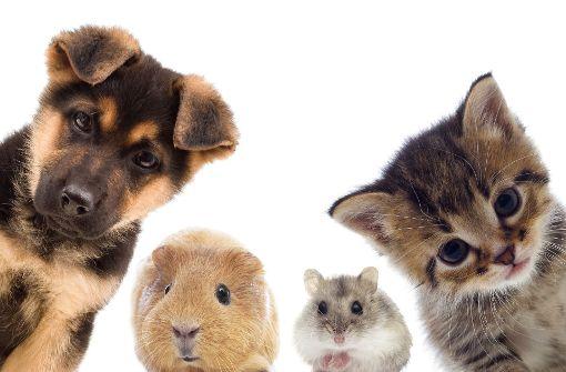 Warum Menschen mit Haustieren wie mit Babys sprechen