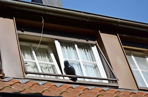 Tauben-Problem: Stadt ohne Handhabe