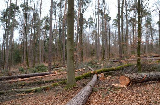 Bürger sollen beim Wald mitreden