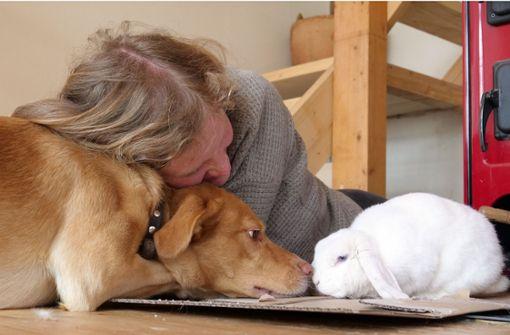 Kaninchen Cosmea versteht sich bestens mit Hund Sölvie