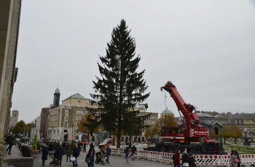 25 Meter hoch ist die Rotfichte auf dem Schlossplatz. Foto: Andreas Rosar Fotoagentur-Stuttg
