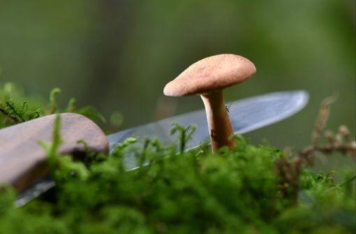 Worauf man bei der Pilzsuche achten sollte