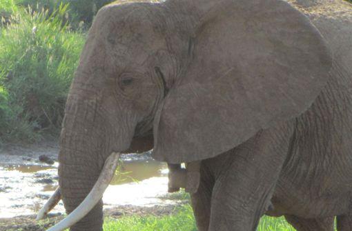 Deutscher Urlauber von Elefant schwer verletzt