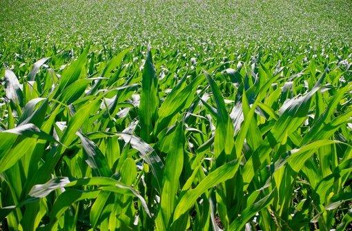 Deutschland vermaist für Biogasanlagen