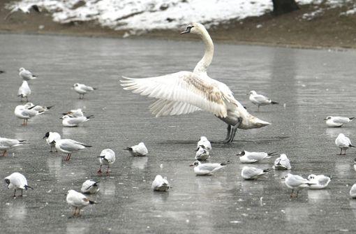Wildtiere trotzen den eisigen Temperaturen