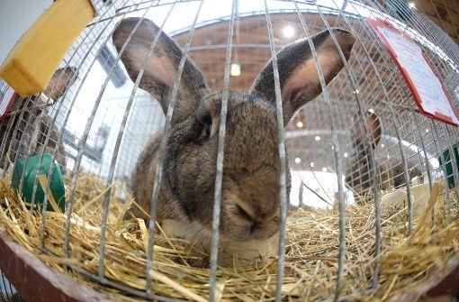"""Polizisten nehmen 33 Kaninchen in """"Schutzgewahrsam"""""""