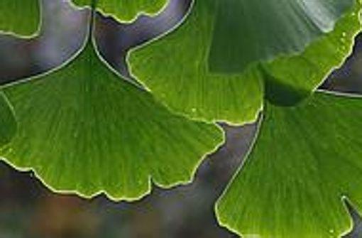 Pflanzen digital bestimmen