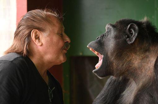 Fast sein gesamtes Leben ist Robby ein Zirkusaffe. Er wurde von Hand aufgezogen und lebt seitdem ausschließlich mit Menschen zusammen. Kontakt zu anderen Affen hatte Robby nach Aussage von Klaus Köhler bisher nicht. Foto: dpa